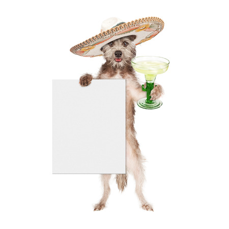 Happy and smiling dog celebrating Cinco De Mayo wearing a big Mexican sombrero and holding a margarita and blank white sign Reklamní fotografie