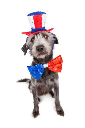 愛国心が強い独立記念日犬の座っている赤、白および青の帽子と蝶ネクタイを着て