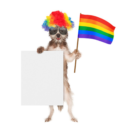 trans gender: Funny dog dressed for a gay pride parade wearing a rainbow color wig and sunglasses while holding a flag and blank white sign
