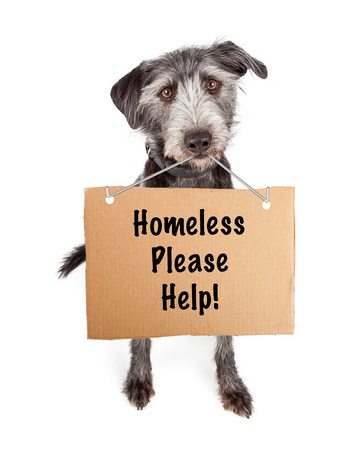 adopt: A cute scruffy terrier crossbreed shelter dog carrying a cardboard sign with the words Homeless Please Help.