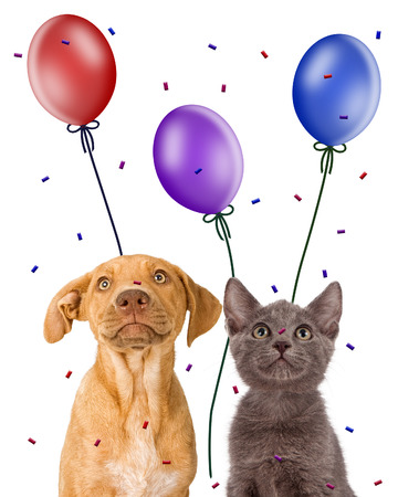 balloons party: Closeup image of a cute young puppy and kitten together looking up at balloons and confetti
