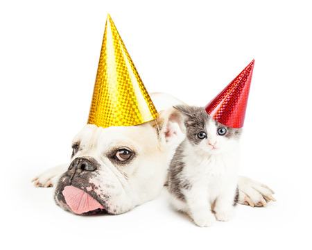 happy birthday baby: A tired looking Bulldog wearing a yellow party hat laying next to a kitten. Both animals are wearing festive party hats Stock Photo