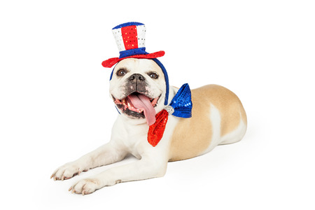 festively: A festively dressed Fourth Of July Bulldog laying at an angle.  Dog is wearing at top hat and bow tie.