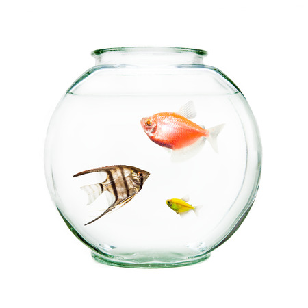 Bowl of pet fish including an angelfish and goldfish Stock Photo