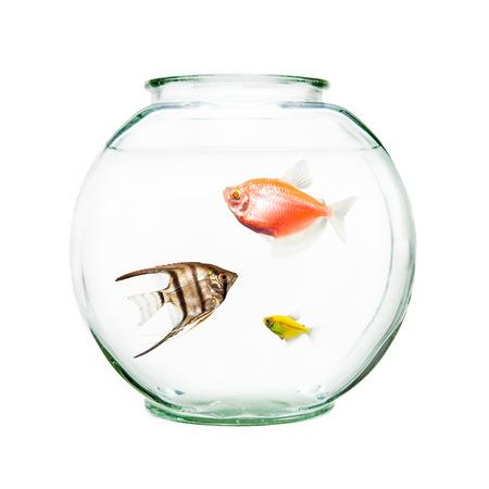 Kom met huisdiervissen, waaronder een angelfish en goudvis Stockfoto