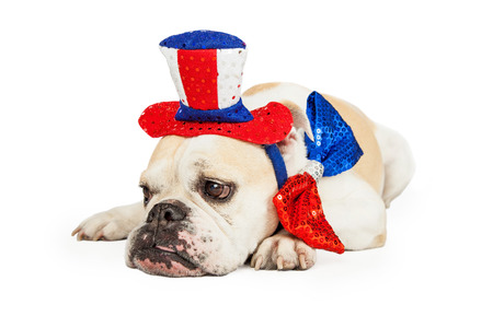 high day: Tired bulldog wearing American Fourth of July party hat and tie laying down Stock Photo