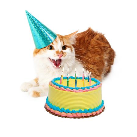 hissing: Foto divertenti di un gatto arrabbiato sibilo mentre indossa un cappello di compleanno e posa accanto a una torta con le candeline
