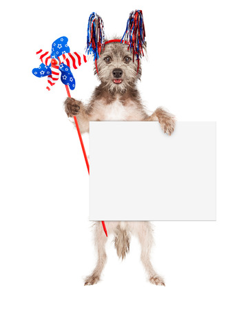 independence day: Cute terrier breed dog dressed for an American holiday celebration with red, white and blue streamer headband and pinwheel holding blank white sign
