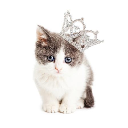 Schattige kleine vijf weken oude kitten dragen van een bergkristal prinseskroon Stockfoto
