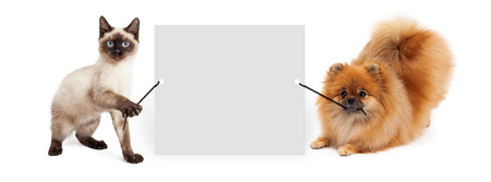 에 마케팅 메시지를 입력 할 수있는 빈 기호를 들고 귀여운 샴 고양이와 포메라니안 강아지