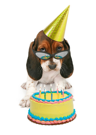 A Basset Hound puppy wearing sunglasses reflecting a birthday cake with candles Фото со стока - 40880643