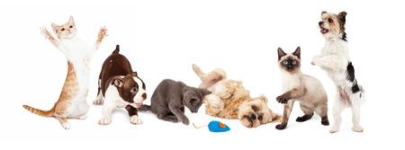 젊은 개와 고양이의 큰 그룹이 함께 연주. 이미지는 일반적인 소셜 미디어 배너에 맞게 크기