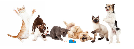 fila: Un gran grupo de gatos y perros jóvenes jugando juntos. Imagen de tamaño para adaptarse a una bandera común de medios sociales Foto de archivo