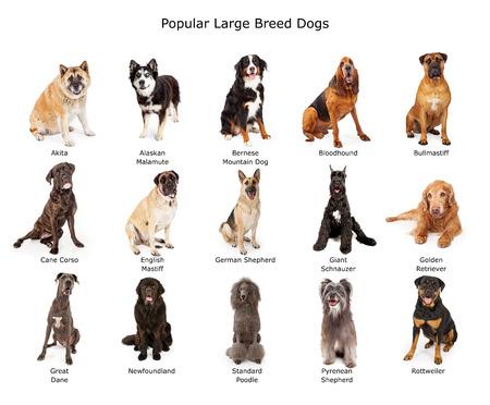 Chien: Un groupe de quinze chiens de grandes races communes ensemble Banque d'images
