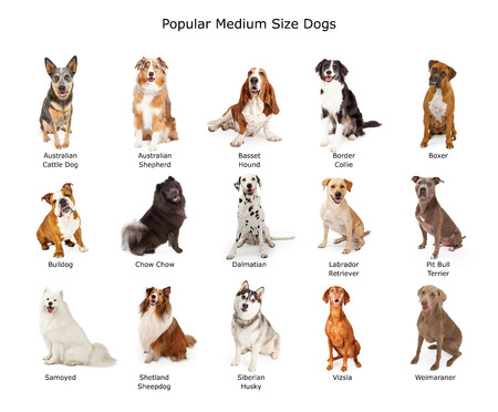 medium length: A group of fifteen different medium size family breed dogs
