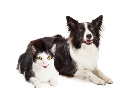 Happy and smiling black and white cat and dog laying together