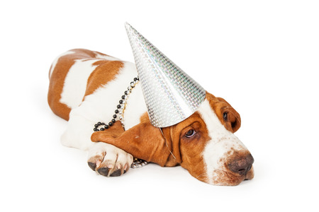 pet new years new year pup: A cute and tired looking Basset Hound puppy dog wearing silver party hat. Dog is laying at an angle looking off to the side.