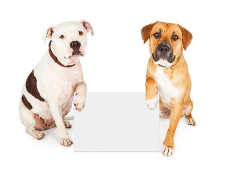 Two cute large breed dogs holding a blank white sign to enter your text onto Stock Photo