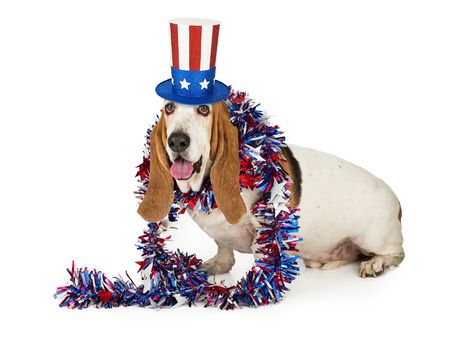independence day: A Happy Basset Hound dog wearing a red, white and blue American themed hat and boa Stock Photo
