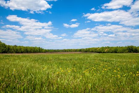 sky sun: A wide open field with green grass and yellow wild flowers on a summer day with a clear blue sky