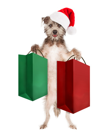 st  nick: Cute dog standing up wearing a Christmas Santa Claus hat and holding a green and a red large shopping or gift bags