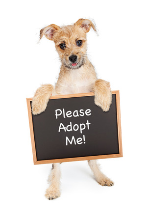 adopt: Cute terrier mixed breed young puppy standing up and holding a chalk board sign with the words Please Adopt Me Stock Photo