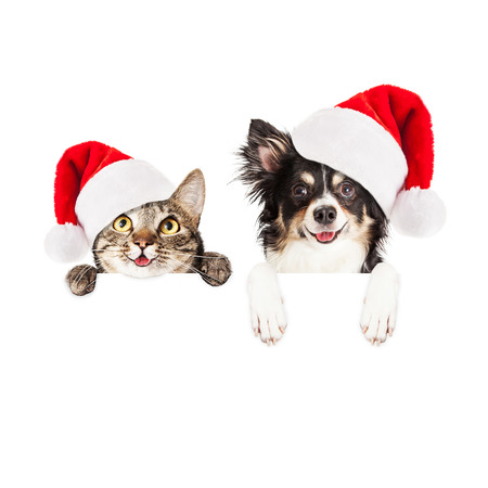 Happy and smiling tabby cat and Chihuahua crossbreed dog with paws over a blank sign wearing Christmas Santa Claus hats Stock Photo