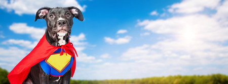 A cute crossbreed dog wearing a super hero costume in a field with blue sky and trees in the background Stockfoto