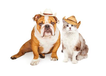 Funny photo of an English Bulldog breed dog and a cat wearing western cowboy hats