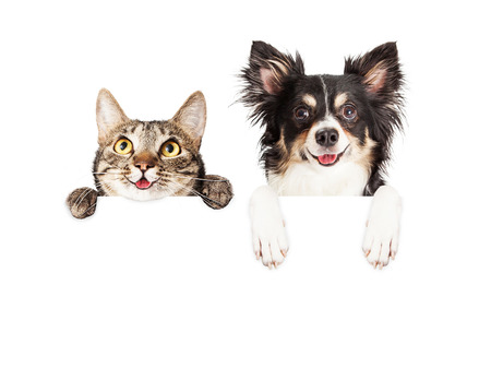 Happy and smiling tabby cat and Chihuahua crossbreed dog with paws over a blank sign