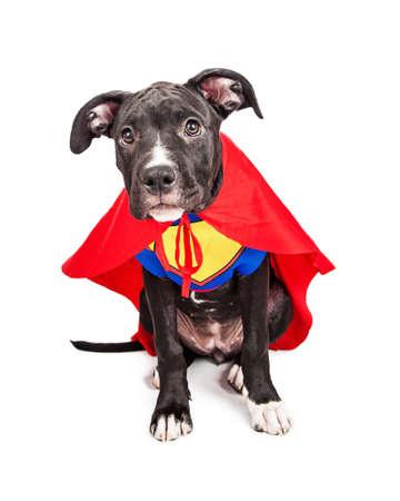 perros vestidos: A seis meses de edad mixta lindo perro cachorro de raza grande vestido como un superhéroe con capa y chaleco Foto de archivo