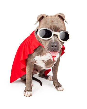 スーパー ヒーロー キャラクターに扮した赤いマントとゴーグルを身に着けている変なピット ・ ブル犬 写真素材