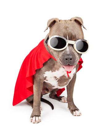 빨간 망토와 고글을 착용 재미 있은 핏불 강아지 슈퍼 영웅 캐릭터로 옷을 입고