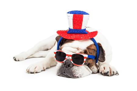 memorial: Funny photo of a Bulldog breed dog laying down wearing red, white and blue sunglasses and hat Stock Photo