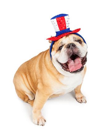bulldog: foto divertida de un perro feliz raza Bulldog Ingl�s llevaba un sombrero de fiesta rojo, blanco y azul de Am�rica Foto de archivo