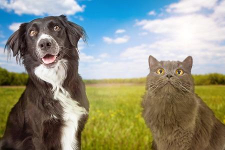 Een close-up foto van een gelukkige jonge hond en kat met een groen grasveld en de blauwe hemel op de achtergrond