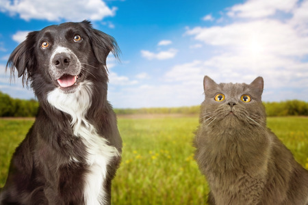 Chien: Une photo en gros plan d'un jeune chien et chat heureux avec un champ d'herbe verte et de ciel bleu en arrière-plan