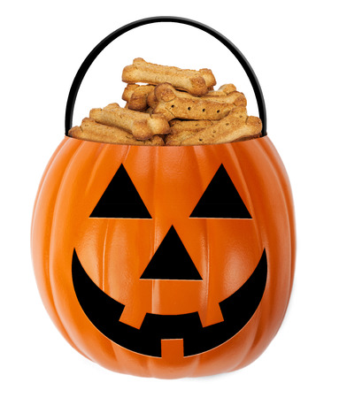 dog biscuit: Halloween jack-o-lantern pumpkin shaped bucket filled with cone shaped dog biscuit treats Stock Photo