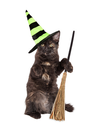Cute little black kitten wearing a Halloween witch hat and sitting up holding a broom