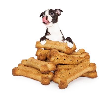 galletas: foto divertida de un perrito lindo que se coloca detrás de una pila gigante de golosinas y galletas de perro se lame los labios