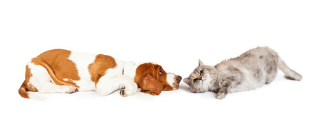 Funny photo of a Basset Hound dog and a grey color cat laying down facing each other. Image sized to fit a popular social media cover image placeholder.