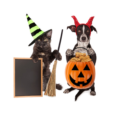 Cute crossbreed dog sitting up holding a pumpkin treat container next to a black cat sitting up wearing a witch hat holding a broom and black chalk board