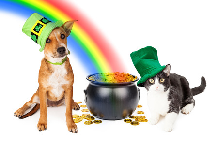 Cat and dog wearing Irish St. Patricks Day hats sitting next to a pot of gold at the end of a rainbow