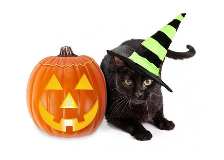 Black cat wearing a green and black striped witch hat laying next to an illuminated jack-o-lantern Halloween pumpkin