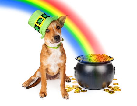 end of rainbow: Cute crossbreed puppy wearing a green Irish St. Patricks Day hat sitting next to a pot of gold at the end of a rainbow Stock Photo