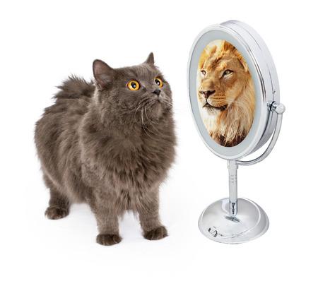 Konzeptionelle Bild einer Katze auf der Suche in den Spiegel und sehen, eine Reflexion von einem großen Löwen
