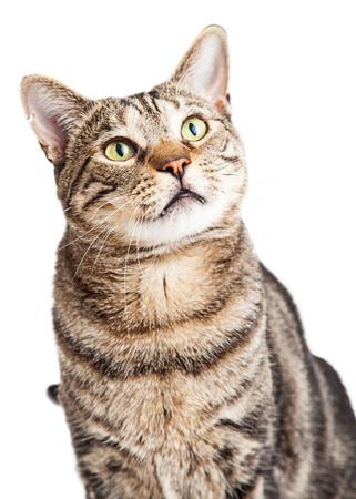 Close-up van een volwassen tabby kat die naar boven kijkt en naar de kant Stockfoto