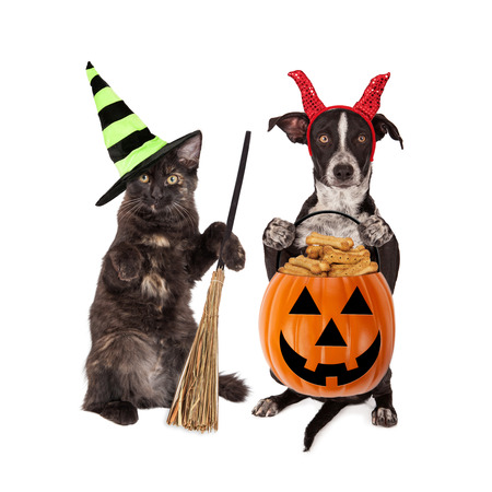 Cute black kitten and puppy dressed in Halloween costumes holding pumpkin filled with dog treats
