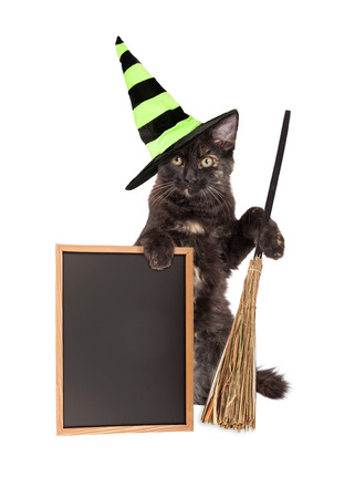 sitting up: Cute little black kitten sitting up wearing a Halloween witch hat and holding a broom and a blank chalk board Stock Photo
