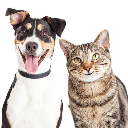 smiling cat: Closeup of a happy and smiling tabby cat and mixed breed dog looking forward into the camera